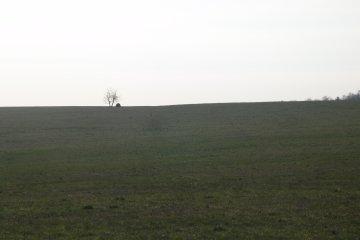 Tetřívek obecný (Tetrao tetrix), Habartice, 21. 4. 2007